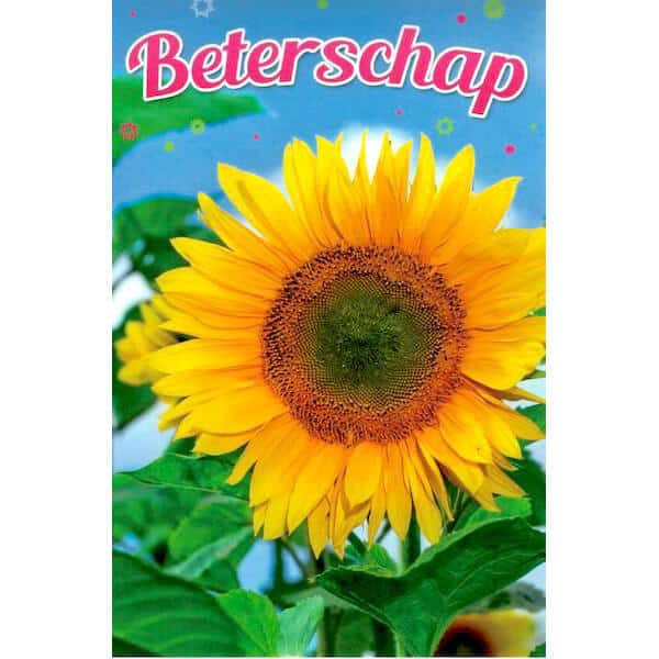 beterschapskaart-grote-zonnebloem-1