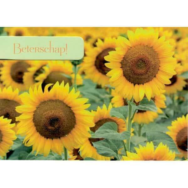 beterschapskaart-veld-zonnebloemen-1