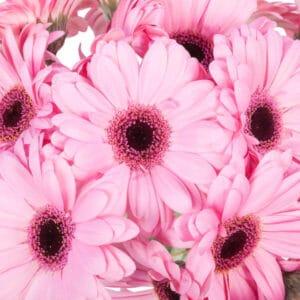 beterschapsboeket-roze-verrassing-2